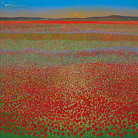 Poppy fields, sunset