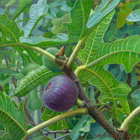 3 Figs, ripe and unripe