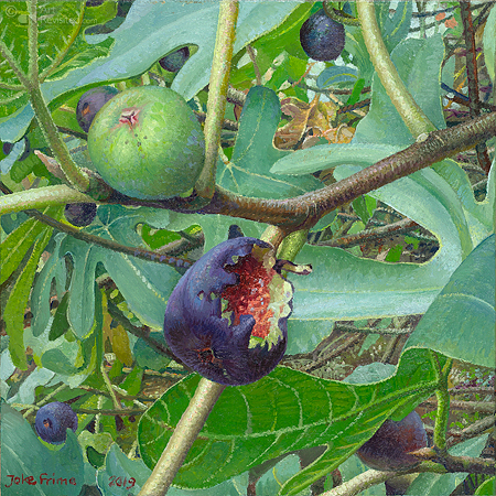 2 figs, bird meal
