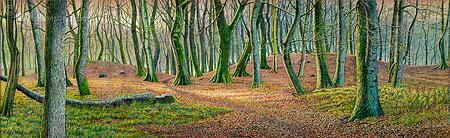 Bos bij Uddel