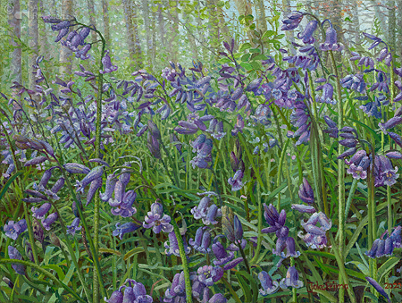 Burgundy Bluebells