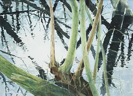 Kreupelhout bij Hoogwater