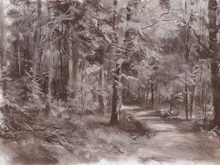 Zonlicht op het bospad