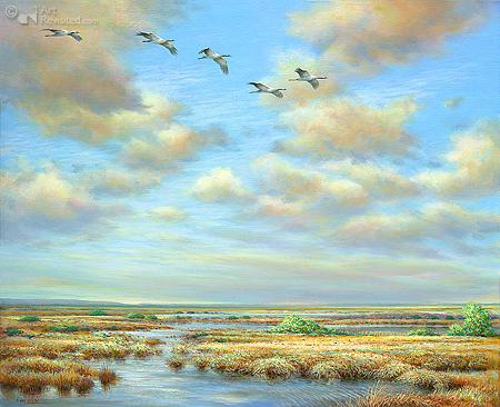 Kraanvogels over het Fochteloërveen