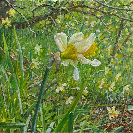 Narcis landschap - Wilde narcis in het groen