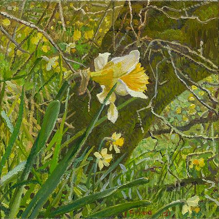 Narcis landschap - Wilde narcis bij Sarloge