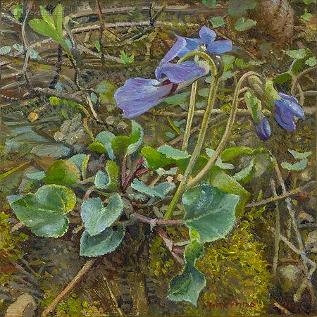 Maartse viooltjes in knop
