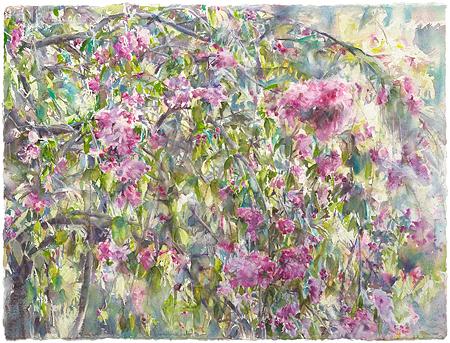 Treur sierappel in bloei