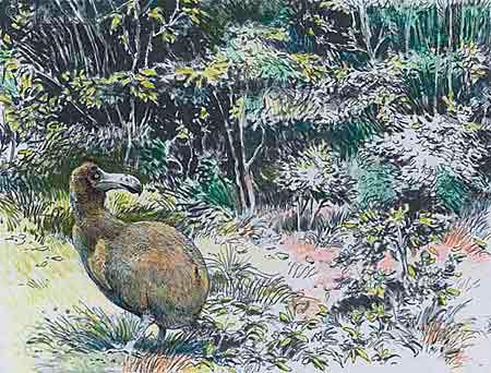Dodo tekening