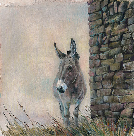 Donkey, Dormillouse (French Alpes)