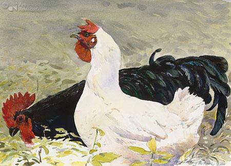 Zwarte haan, witte kip