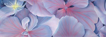 Bodemzee hortensia