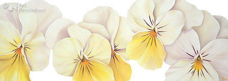White yellow violets